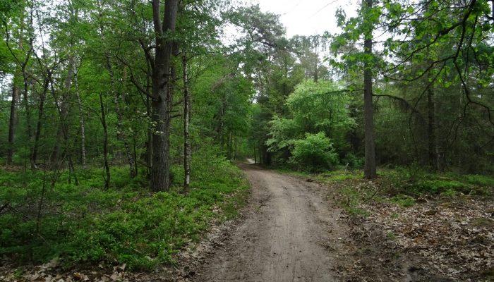 Bos bos en bos