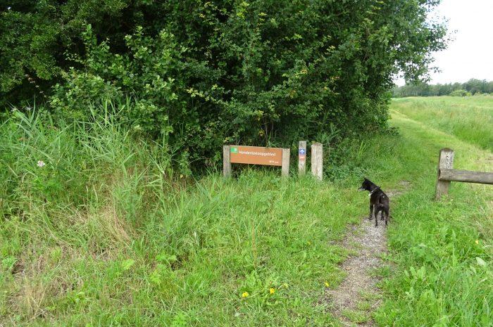 Hondenlosloop gebied